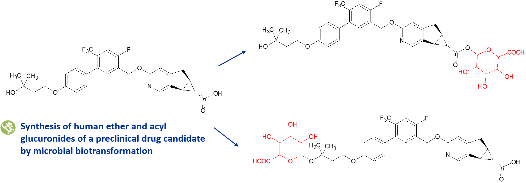acyl glucuronide case study image