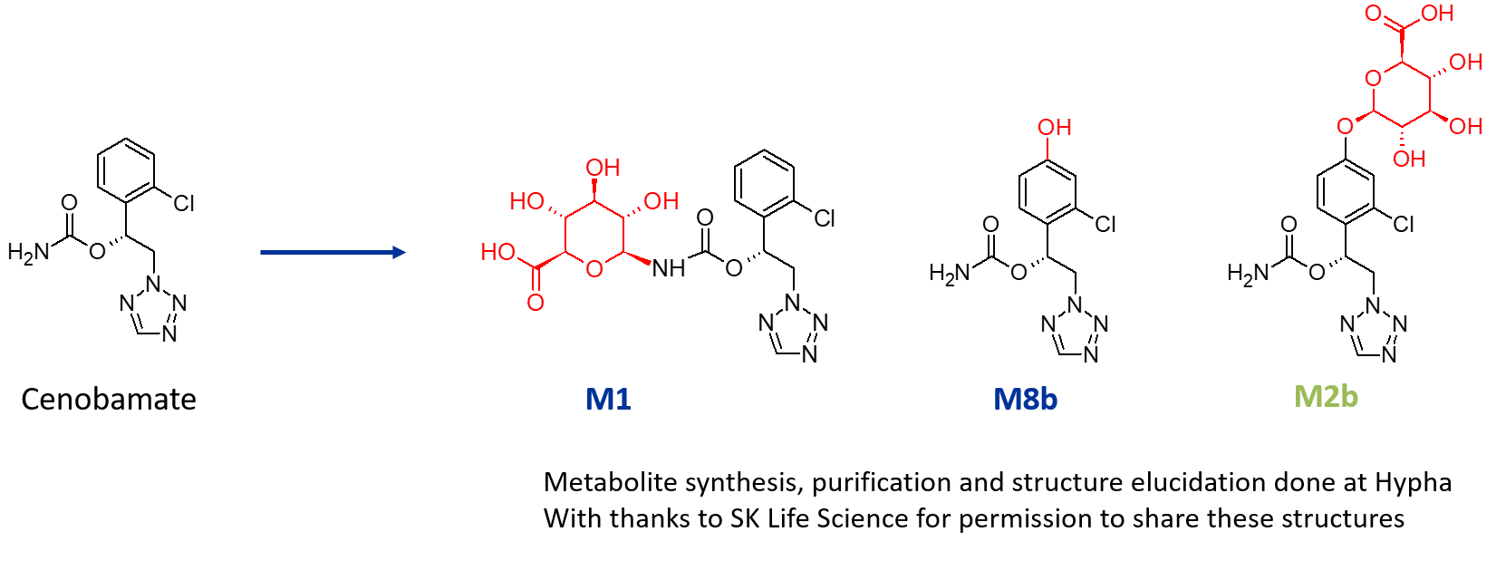 cenobamate metabolites case study image