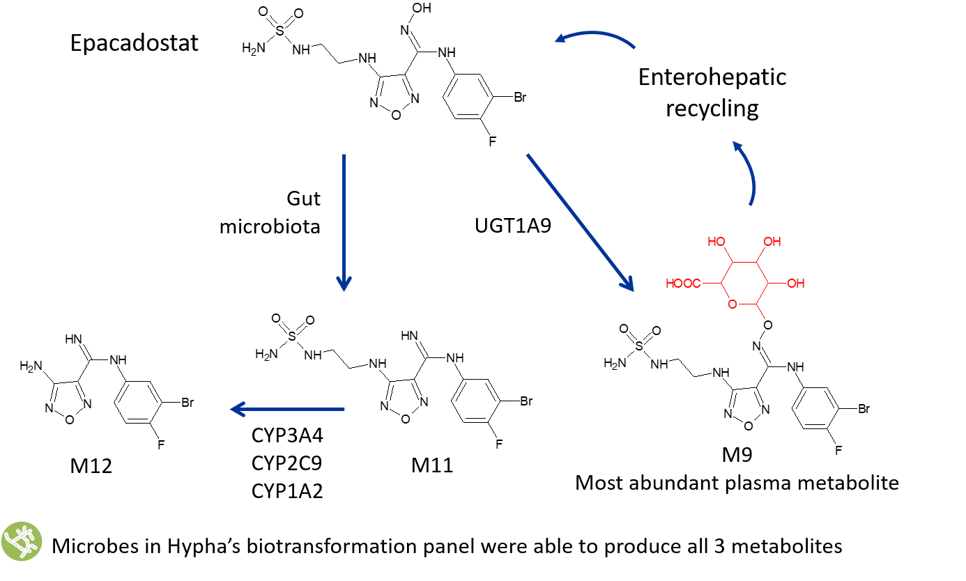 epacadostat metabolites Case Study image