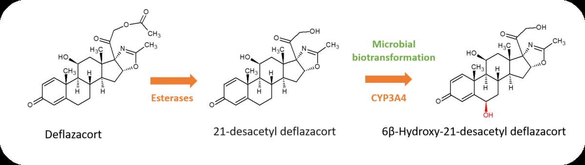Deflazacort metabolites graphic