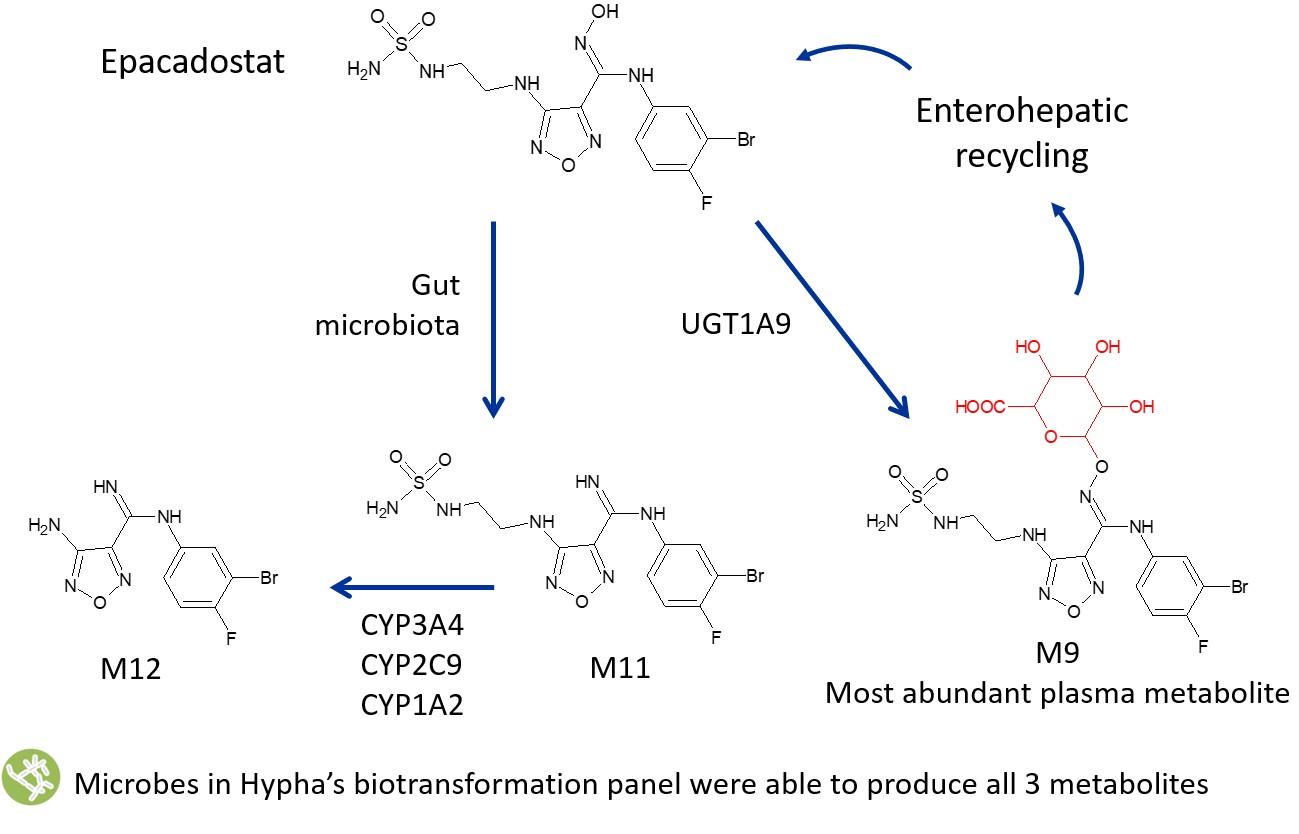 epacadostat metabolites diagram