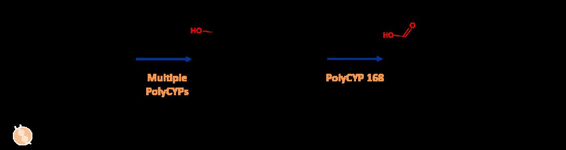 meloxicam metabolites case study image